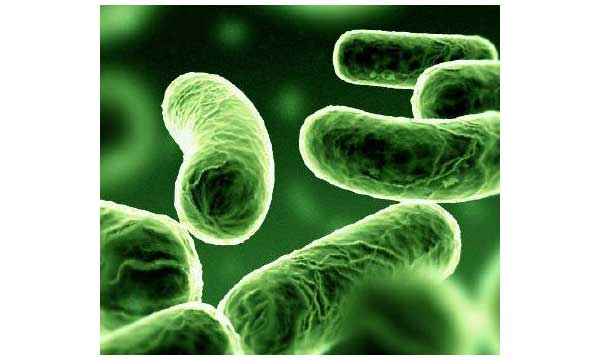 Kemoototrof Nedir? Hangi canlılar kemoototroftur?