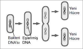 Açık Lise Biyoloji2 Test 2