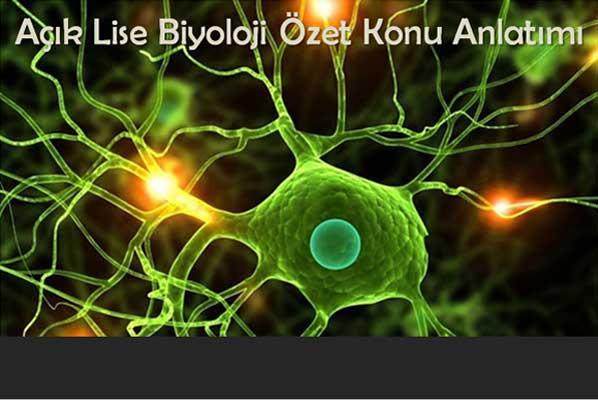 Açık Lise Seçmeli Biyoloji 1 (Biyoloji 5) Testleri ve Konu Özetleri