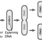 Açık Lise Biyoloji 2 Test (Mart 2018)
