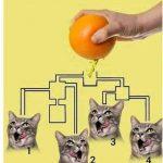 Portakal suyunu ilk önce hangi kedi içer?
